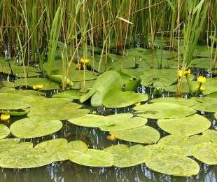 Значение водных растений